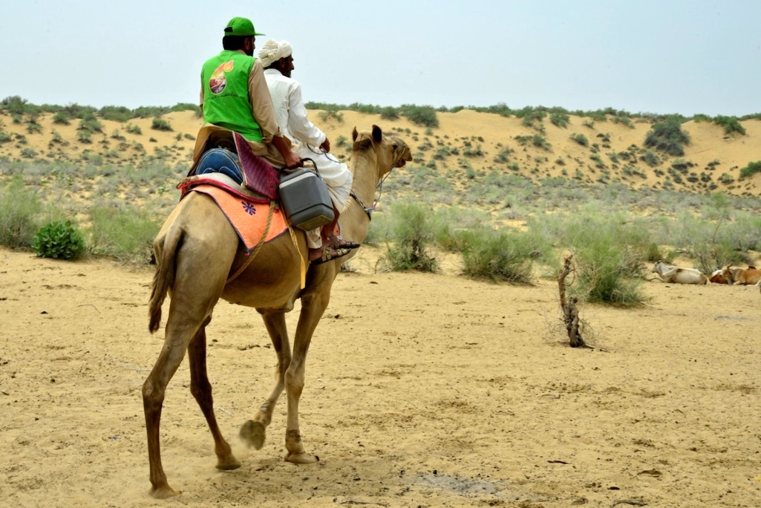 Vaccinators traverse rural Pakistan by camel to reach villages with otherwise inaccessible children.