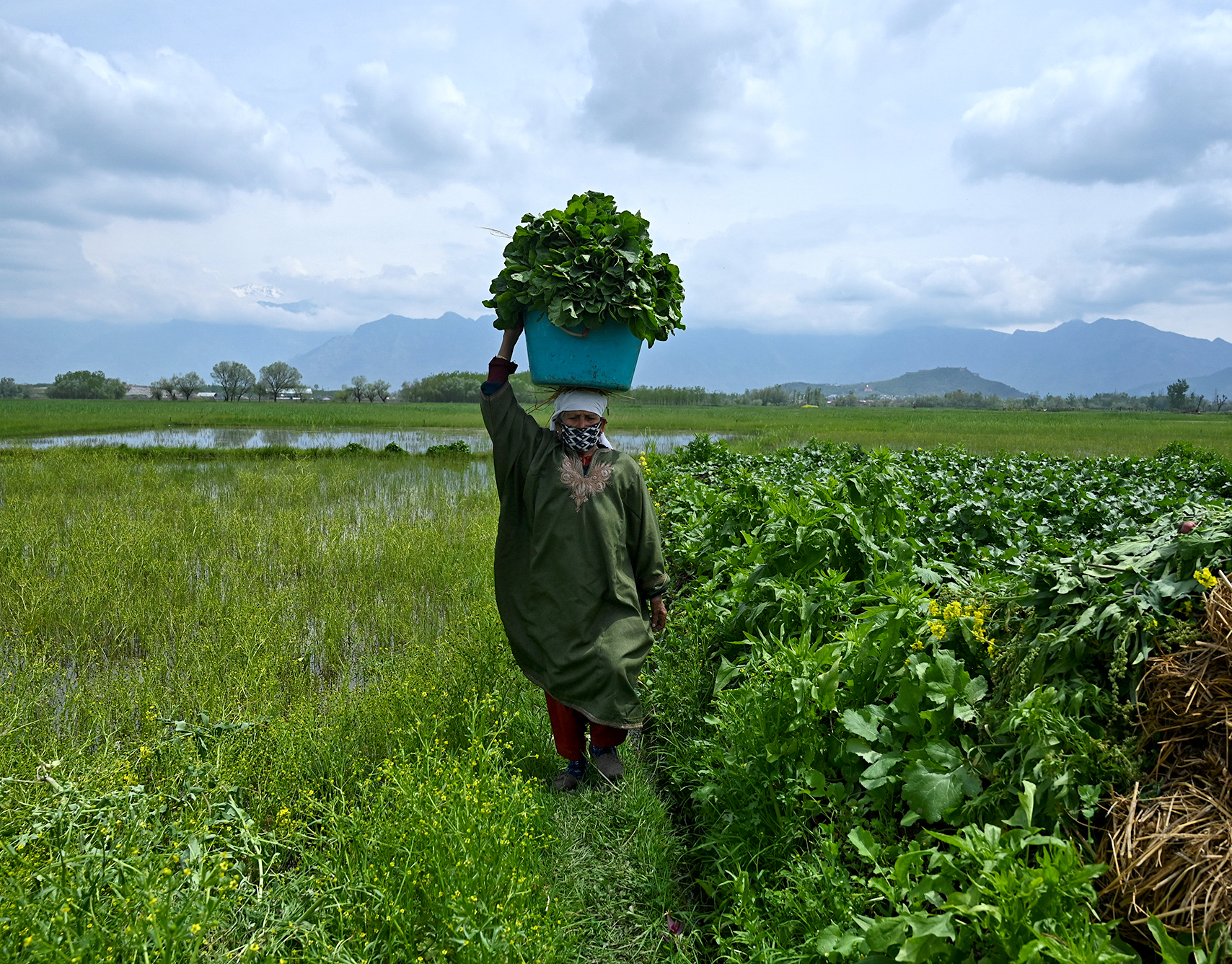 A woman carries a basket with vegetables recently harvested in Srinagar on April 20, 2020.   TAUSEEF MUSTAFA/AFP via Getty Images