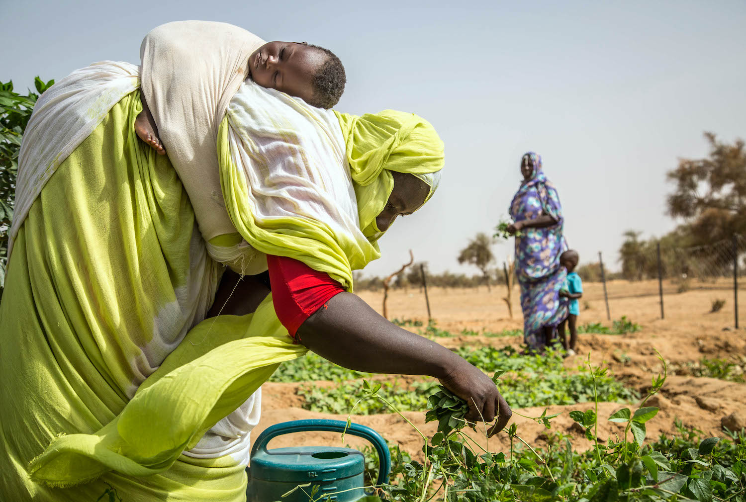 A woman works with her child on her back in a vegetable patch in Tokomadji, Mauritania in July 2020.   Raphael Pouget/UNICEF